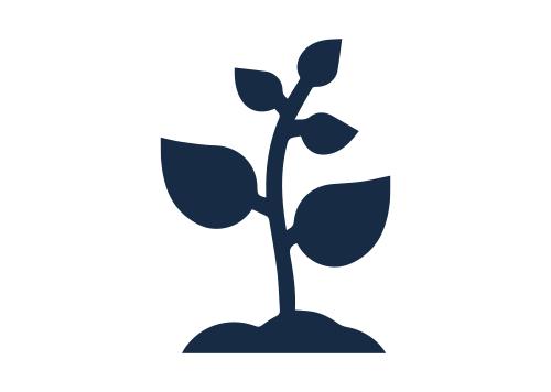 Stevia plantation and processing company